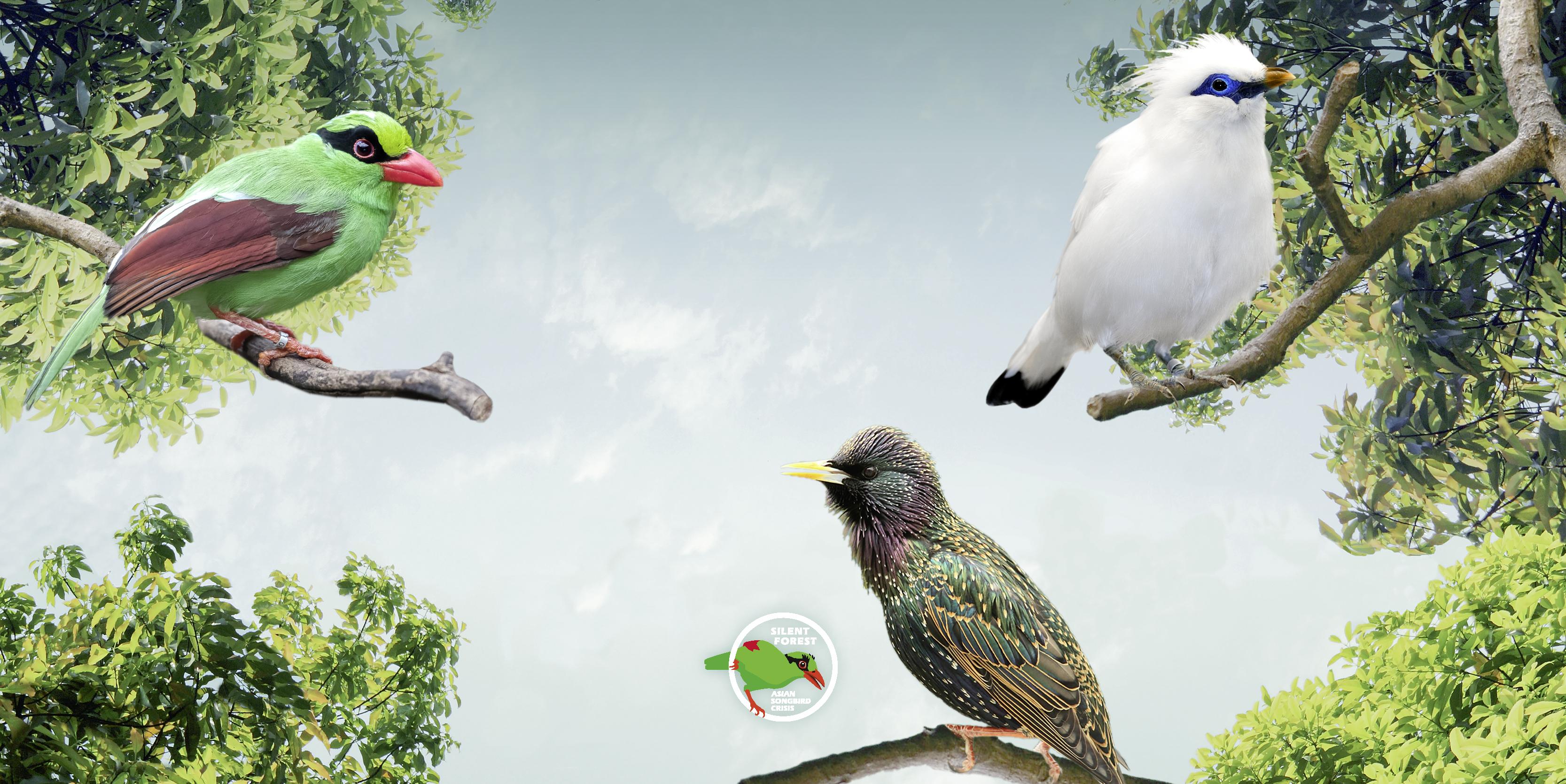 Startslider Songbird