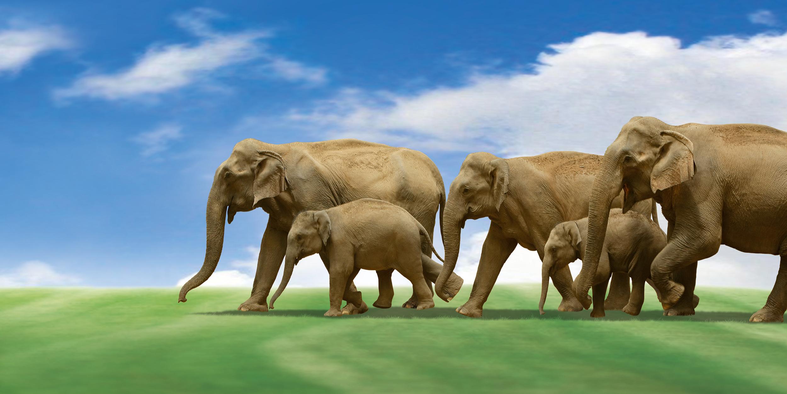Startslider Elefantentag