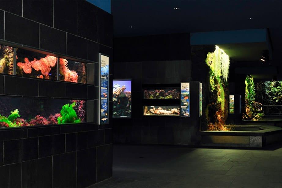 Kölner Aquarium